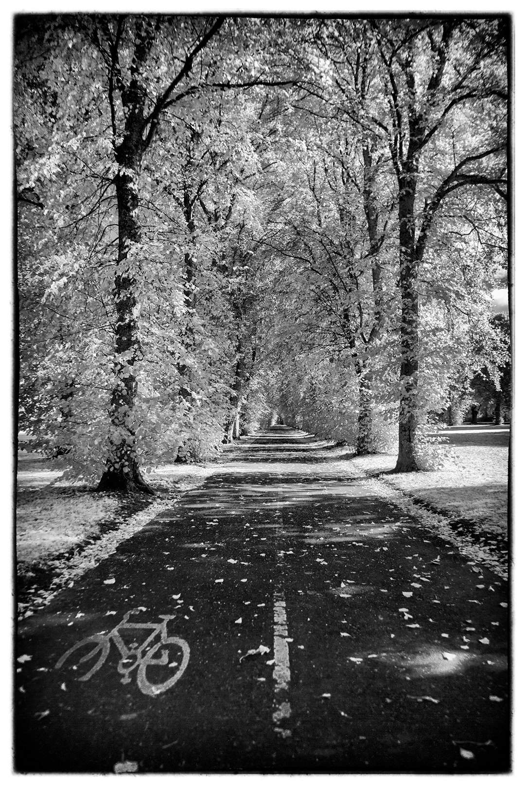 Robertson Park (Infra-red)