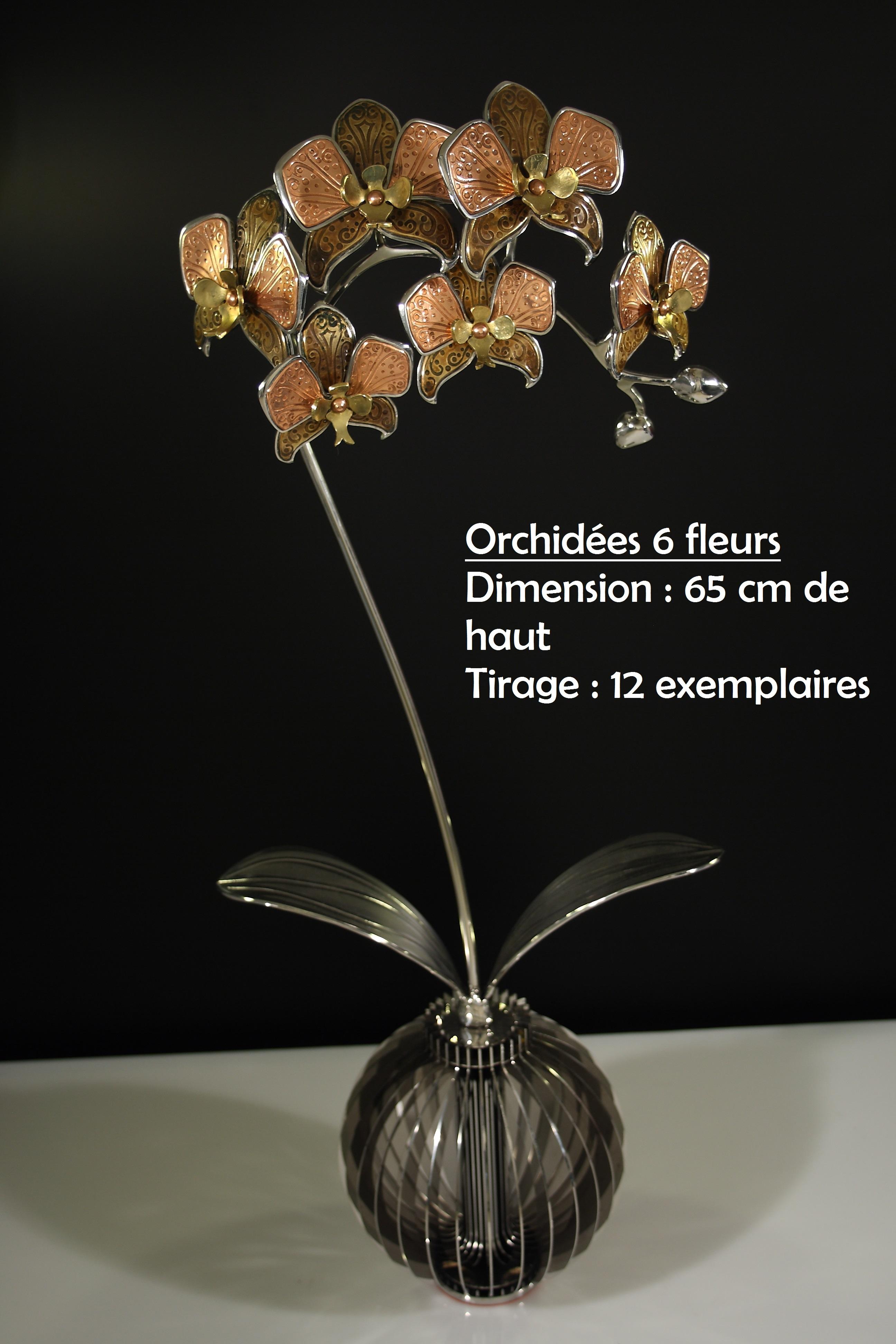 Orchidées_6_fleurs