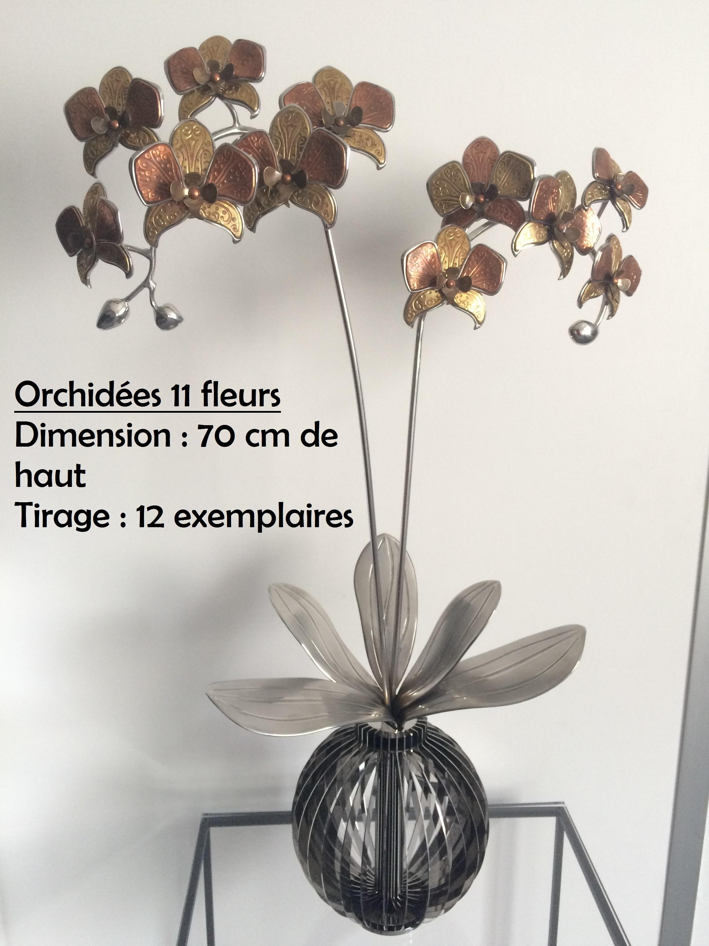 Orchidées_11_fleurs