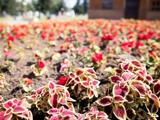 В Солнечногорске обновляют цветочные композиции