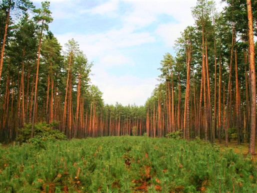 Солнечногорцы могут узнать онлайн, граничит ли участок с землями лесного фонда