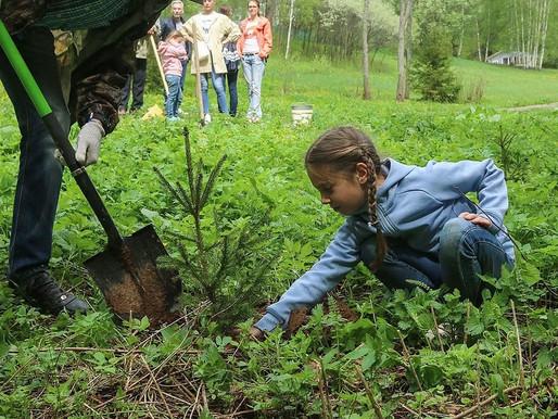 Музей-заповедник Д.И.Менделеева и А.А.Блока присоединится к акции «Наш лес. Посади свое дерево»