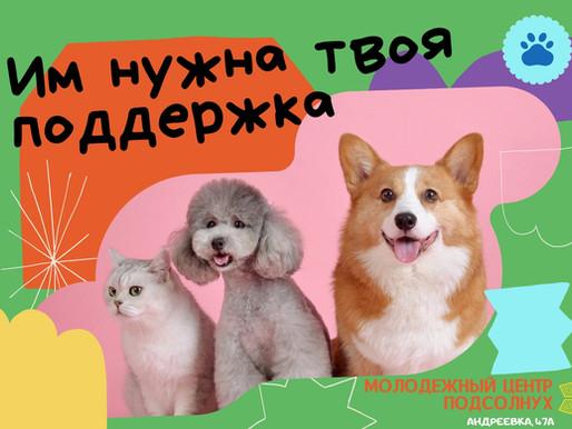 Солнечногорские волонтеры посетят приют для бездомных животных