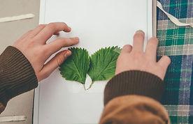 faire-un-herbier-1.jpg
