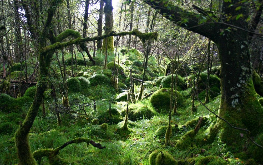 Image of the ariundle oak woods