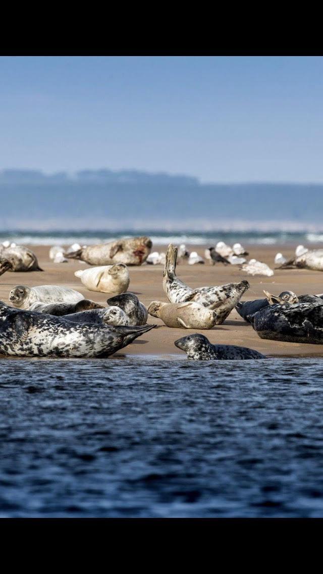 Fancy some seal spotting