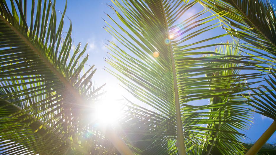 Hawaii, palm tree