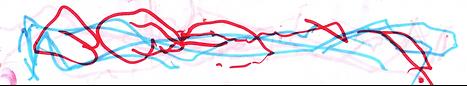 digital doodle 2.png