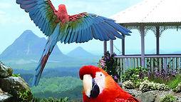 bird_world.jpg