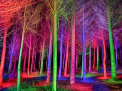 Bosque de Ángeles