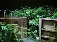 Abandoned Tsunami Gate