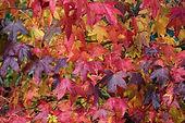autumn leaves mixed 2.jpg
