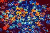 blue fall leaves.jpg
