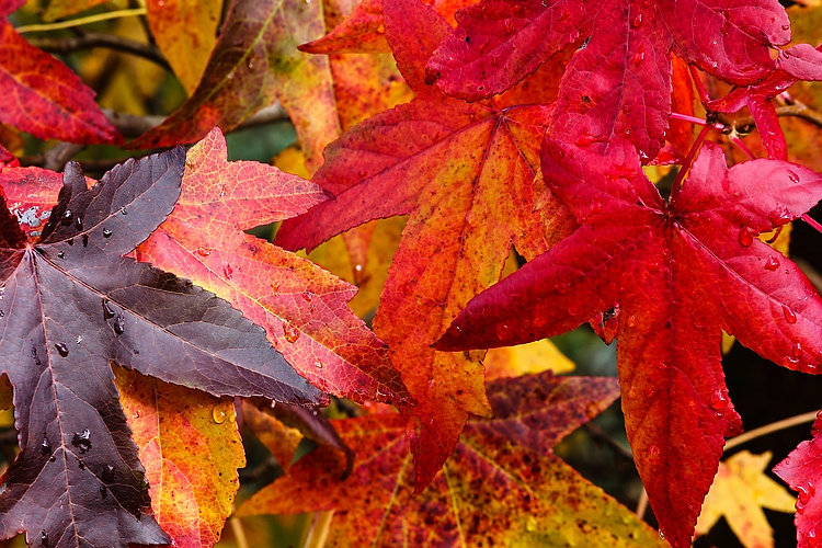 autumn leaves colors 2.jpg
