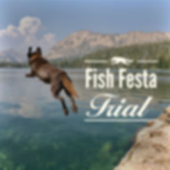 fish festa trial cover-01.jpg