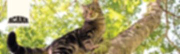 Acana banner cat and dog-03.jpg