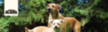 Acana banner cat and dog-04.jpg