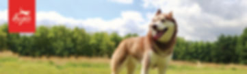 Orijen banner cat and dog-04.jpg