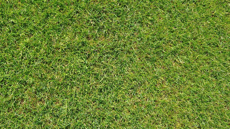 grass-1176417_1920.jpg