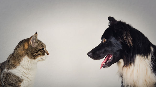 The eternal duel between dog and cat for