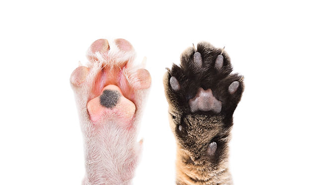 Paws of cat and dog together isolated on