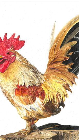 Hill, Rick - Roul the Roost - Colored Pencil - 16 Inches x 16 Inches - $2,810.jpg