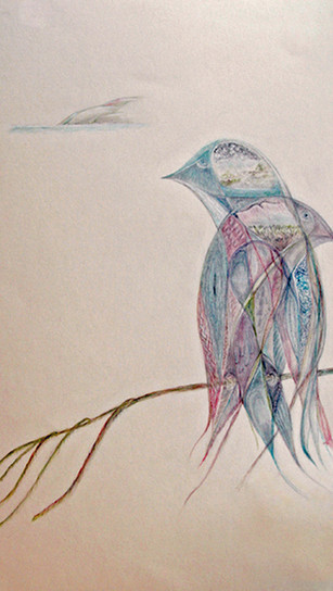 Glass, Malcolm - Deux Oiseaux - Colored Pencils on Paper - 18 Inches x 12 Inches - $600.jp
