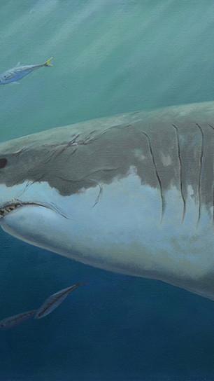 Jassar, Alhaitham - King of Sharks - Oil on Belgian Linen - 24 Inches x 40 Inches - $6,000