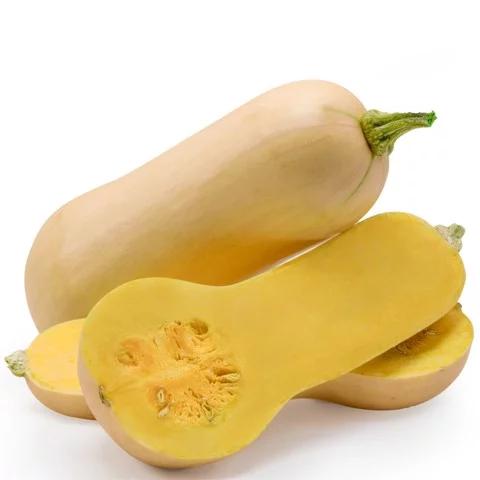Bí hạt đậu được trồng theo phương pháp hữu cơ