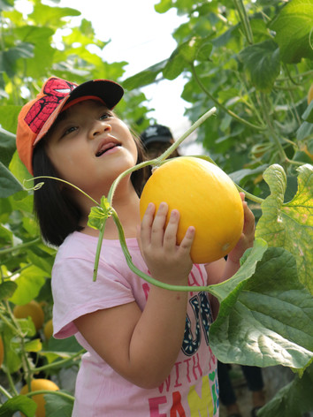 Hái trái cây tươi