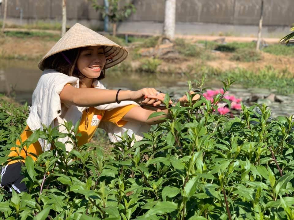 Thu hoạch rau bầu đất
