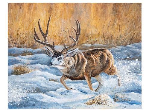 #84 Mule Deer Chasing