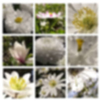 Kvety_bile_makro_9.jpg