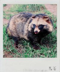 Bucket List Polaroid 27