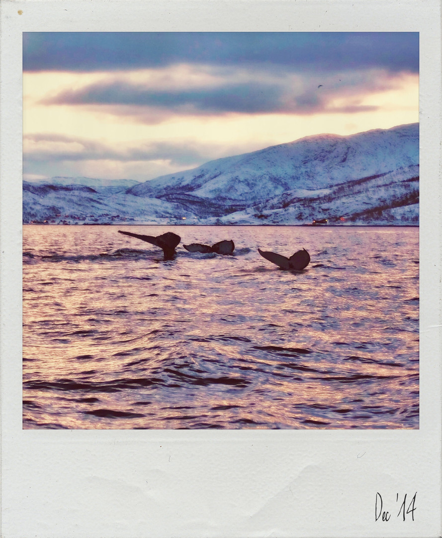 Bucket List Polaroid 7