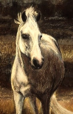 SMALL GREY PONY