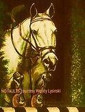 Horse Jumper portrait by artist BETS Klieger
