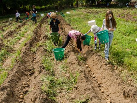 Introducing the Threefold Community Farm