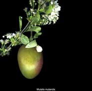every fruit has its season