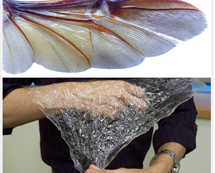 Insect inspired bioplastic