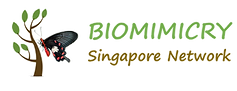 BiomimicrySGNetworkLogo_transparent_edit