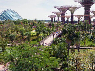 'Super Trees' - Gardens by the Bay