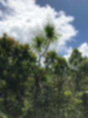 General nature shots2.JPG