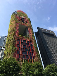 """A verdant tower of green in the heart of Singapore's dense Central Business District (CBD), Oasia Hotel Downtown is a prototype of land use intensification for the urban tropics.  In response to the brief for distinct Offices, Hotel & Club rooms, WOHA Architects created this tropical """"living tower"""" with a series of different strata, each with its own sky garden. These additional """"ground"""" levels allow generous public areas for recreation and social interaction throughout the high-rise, despite the inner city high density location.  Each sky garden is treated as an urban scale verandah, sheltered at high level by the preceding sky garden. The openness allows breezes to pass through the building for good cross-ventilation thereby allowing functional, comfortable, tropical spaces with greenery, natural light and fresh air. The sky gardens and external façade are beautifully landscaped as an architectural surface treatment achieving an overall Green Plot Ratio of 1,100%. The tower's red aluminum mesh cladding houses 21 different species of creepers, providing food for the birds and insects."""