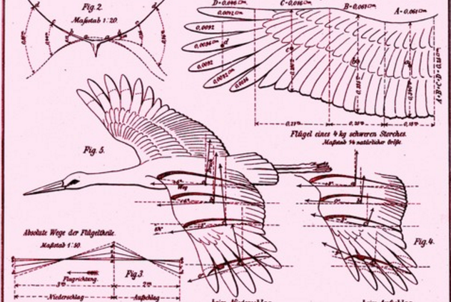 An extract from Otto Lilienthal's Mechanics of White Stork flight