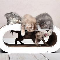 Le maitre kittens.webp