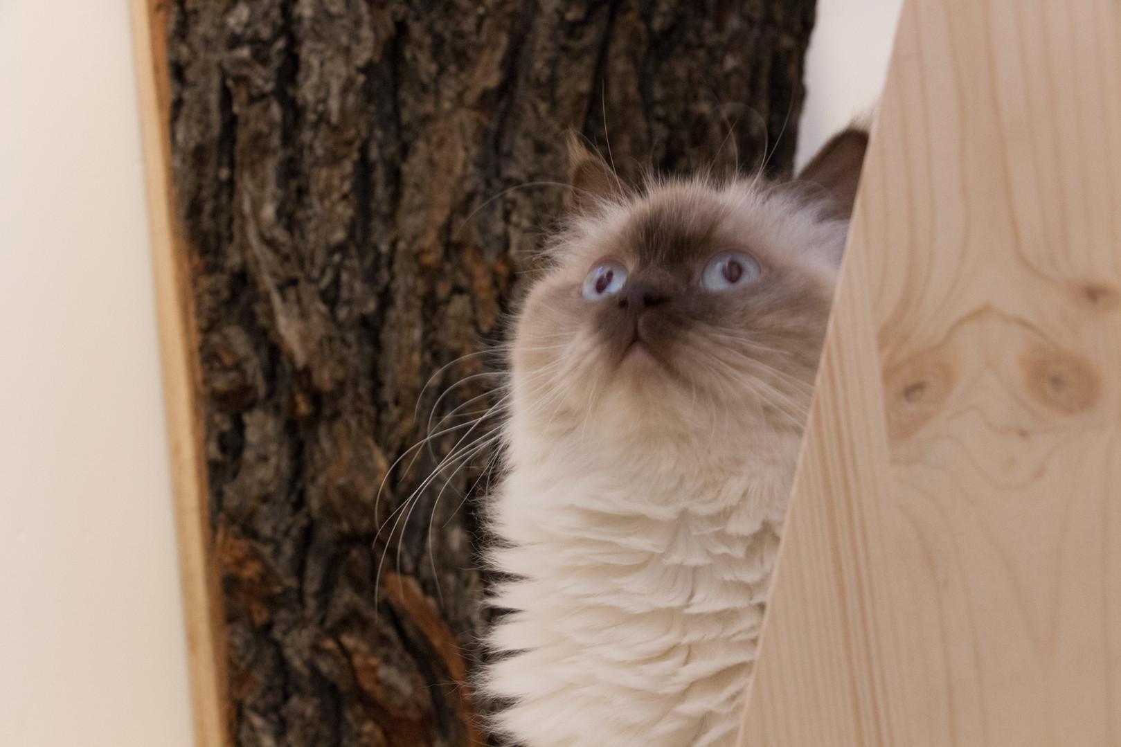 Krabboomstammen; een droom voor elke kat - kattenhotel 'Kat op hotel'