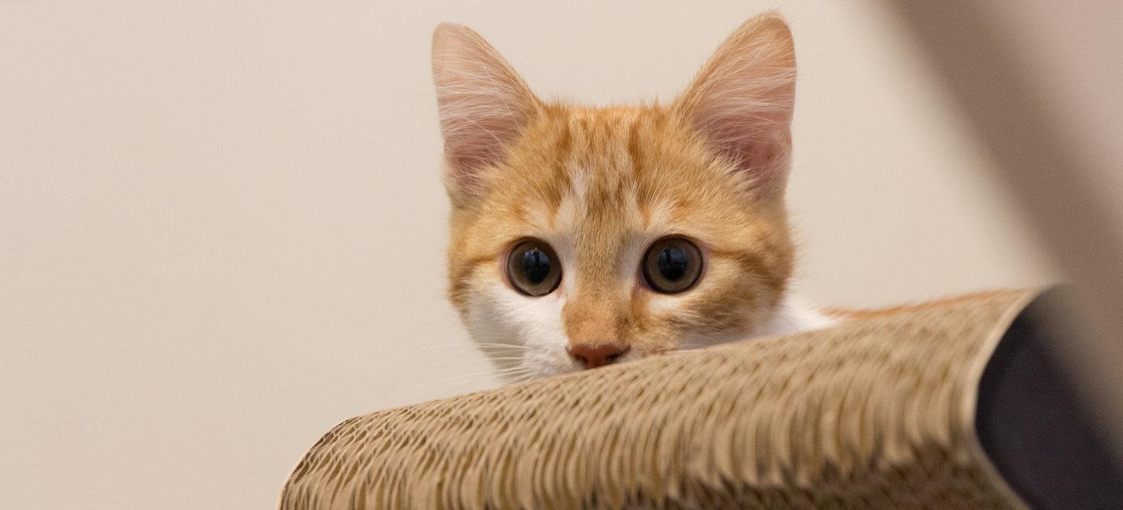 Kattenhotel 'Kat op hotel'