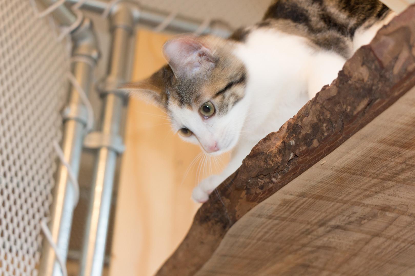 Diverse klimmogelijkheden voor je kat - kattenhotel 'Kat op hotel'