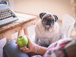 Warum Gewichtsmanagement bei Ihrem Hund wichtig ist